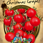 Tomaat Christmas Grapes