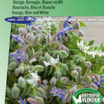 Borage Blauw en wit (Borago officinalis)