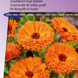 Goudsbloem Ball's Orange - Calendula