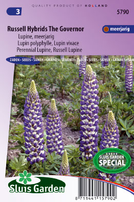 Lupine Russel Hybrids The Governer - Lupinus