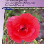 Papaver Red Corn Poppy (Klaproos)
