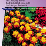Afrikaan Orange Flame - Tagetes
