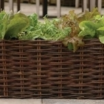Natural Willow Salade Planter - Burgon en Ball