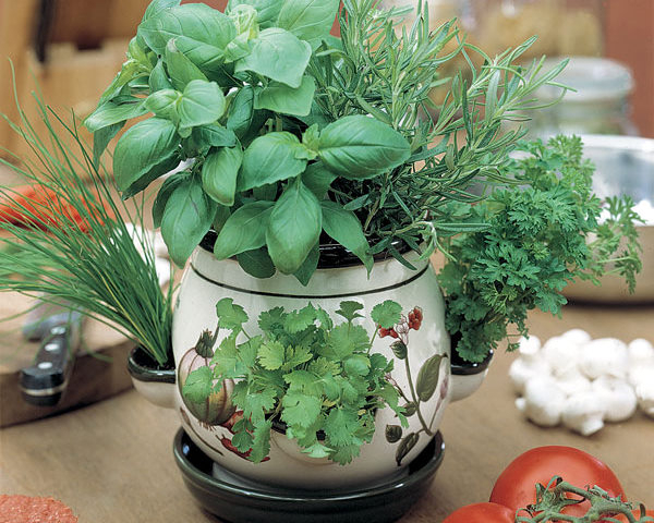 1240567564Kitchen_herbs.jpg
