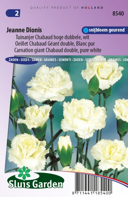 Anjer Jeanne Dionis - Dianthus Chabaud