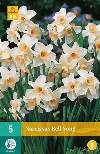 Narcis Bell Song - Narcissus