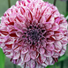 Dahlia Decoratief Marble Ball