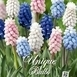 Blauwe Druifjes Sweet Candy Mix - Muscari