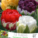 Tulpen Ice Cream Mix