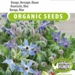 Borage Blauw EKO - Borago officinalis