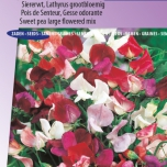 Siererwt Royal Family Mix – Lathyrus Odoratus