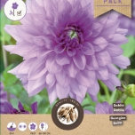 Dahlia Decoratief Blue Boy