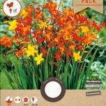 Crocosmia Mix - Montbretia